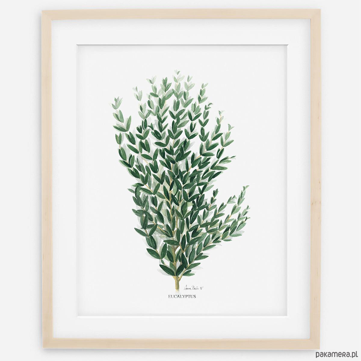 Plakat Botaniczny Eukaliptus Pakamerapl