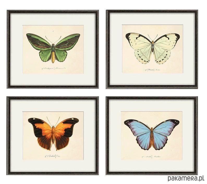 Motyle bluzki t shirty damskie Pakamera.pl