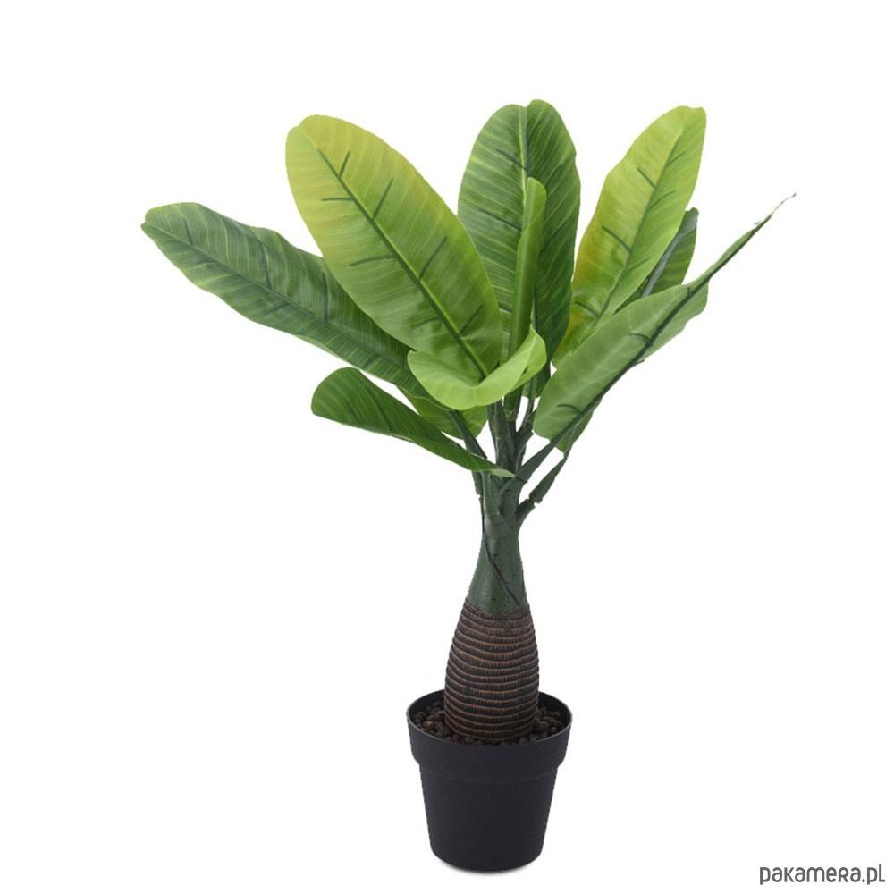 Drzewko Palma Dekoracyjna W Doniczce Ii Pakamerapl