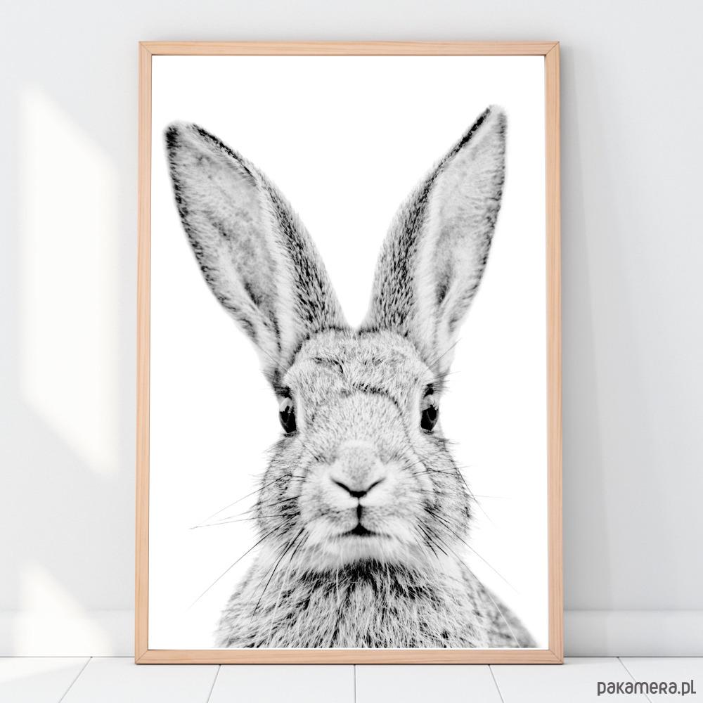 Plakat Obrazek Królik Czarno Biały Pakamerapl