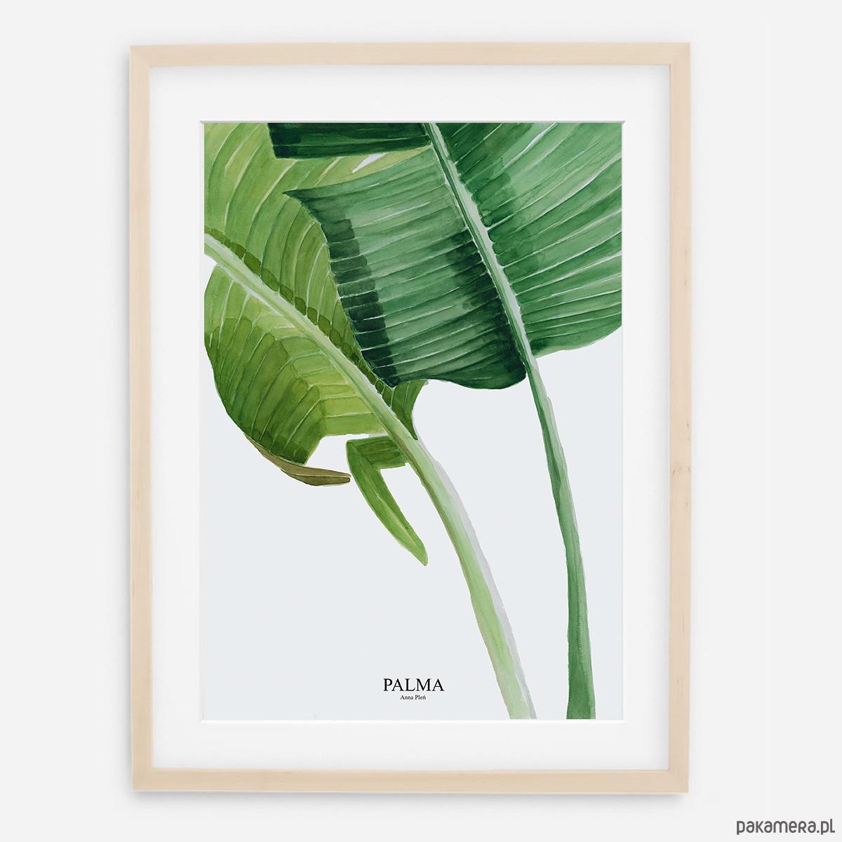 Plakat Botaniczny Palmy Pakamerapl