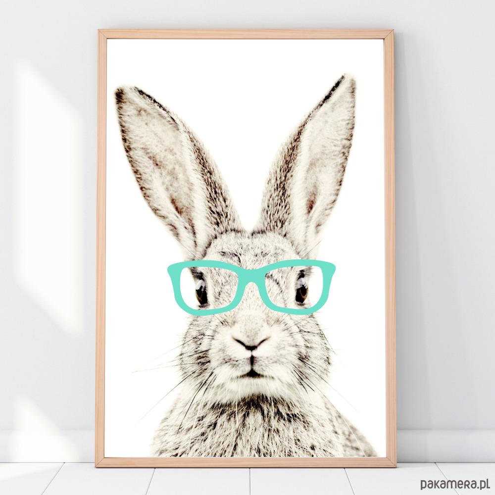randki z królikami randki z Malmo