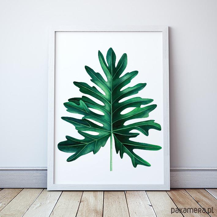 Plakat Motywy Roślinne Liść 3 Pakamerapl