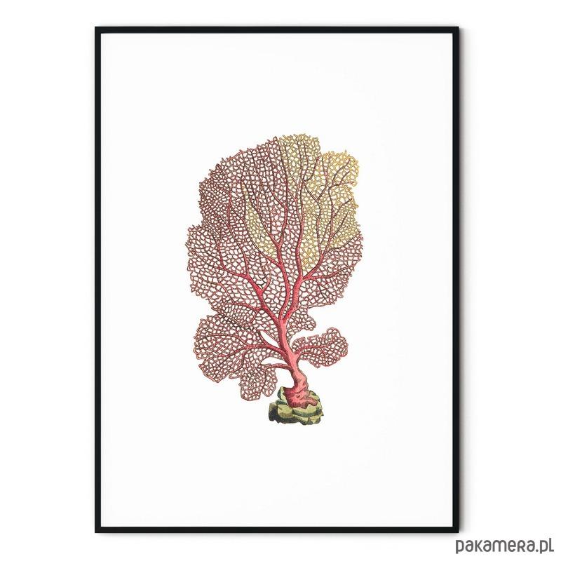 Plakat Botaniczny Vintage Rafa Koralowa Pakamerapl