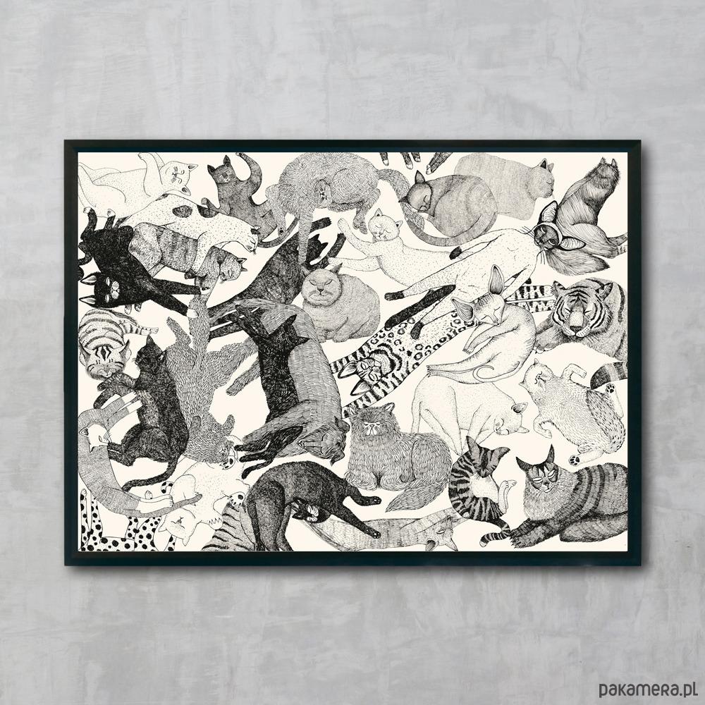 46286e61a51b22 PLAKAT KOTY 70x50 cm - plakaty - Pakamera.pl