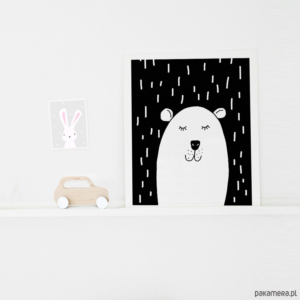 Plakat Miś Polarny A3 Pakamerapl