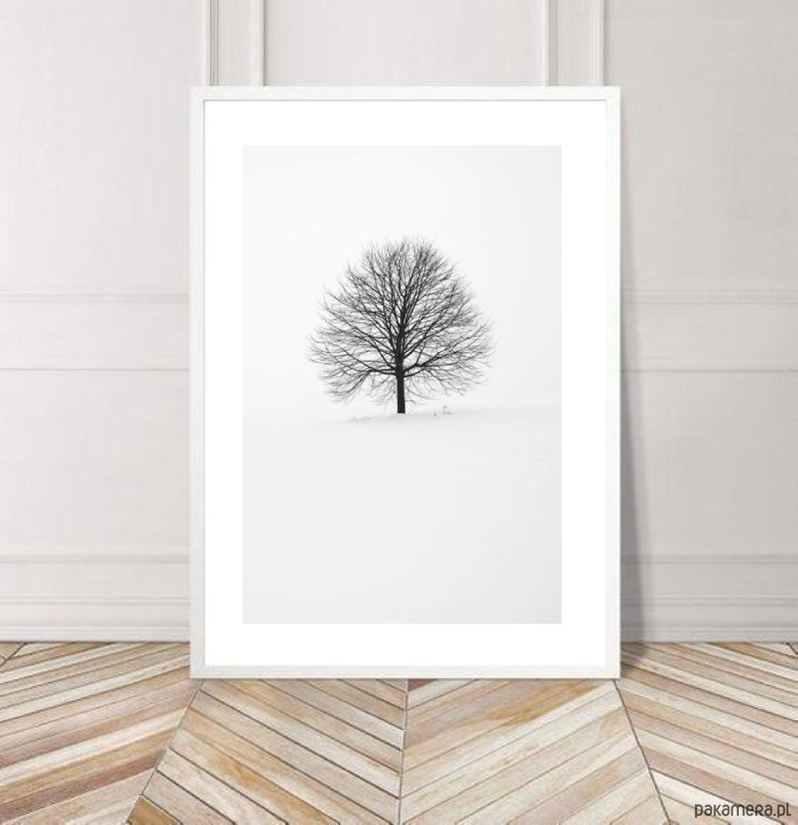Plakat Samotne Drzewo Biało Czarny Foto Pakamerapl