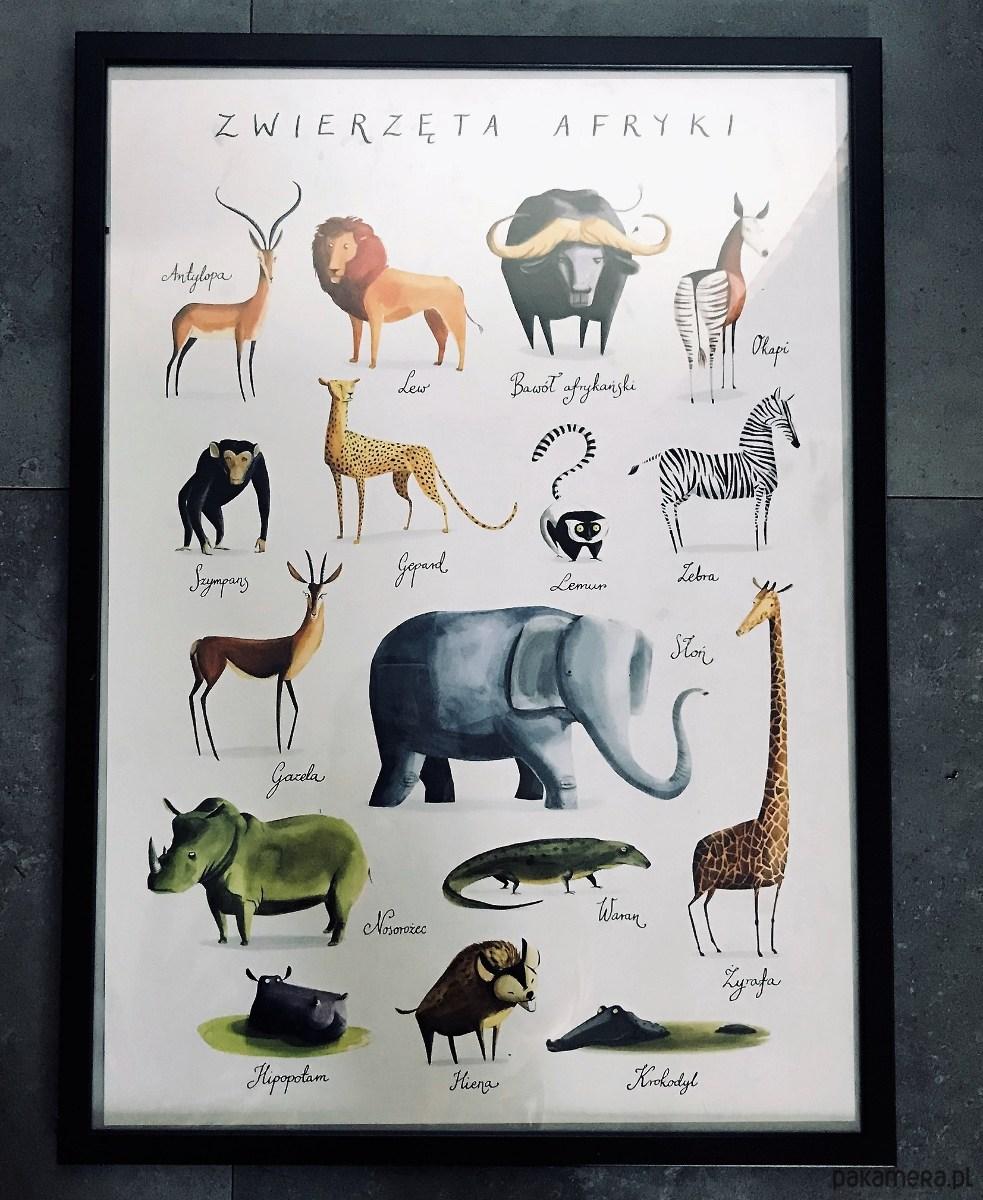 Plakat Zwierzęta Z Afryki Pakamerapl