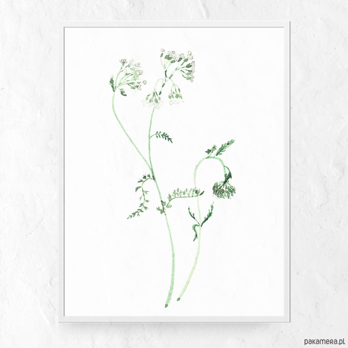 Plakat Kwiaty Polne Grafiki I Ilustracje Pakamera Pl