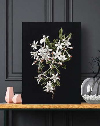 Plakat Black Flower