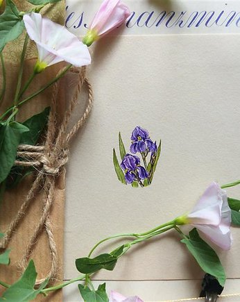 Irysy, Botanical illustration, miniatura