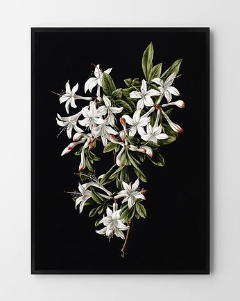 Flower in black - plakat
