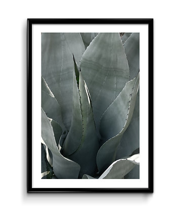 Agave - plakat