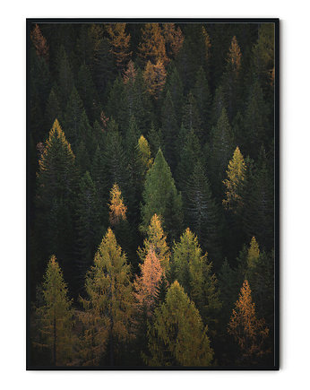mountains, Plakat skandynawski Deep Forest