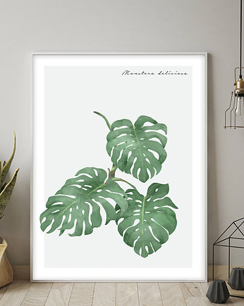 Plakat MONSTERA