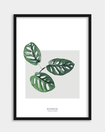 Plakat Monstera Obliqua