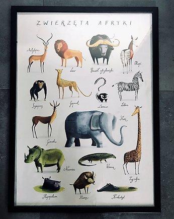 Polski Ilustrator Pakamerapl
