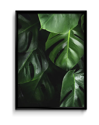 Bury Lis, Monstera plakat