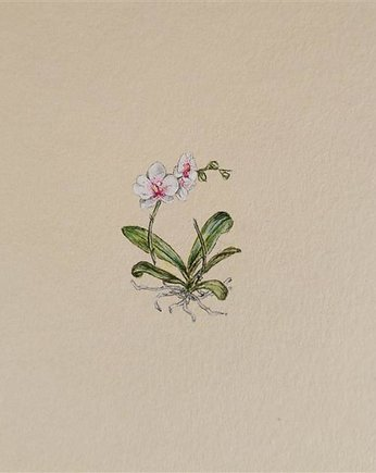 botanical, Orchidea, Botanical illustration, miniatura