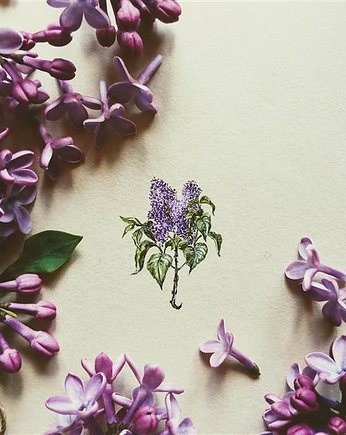 botanical, Bez, Botanical illustration, miniatura