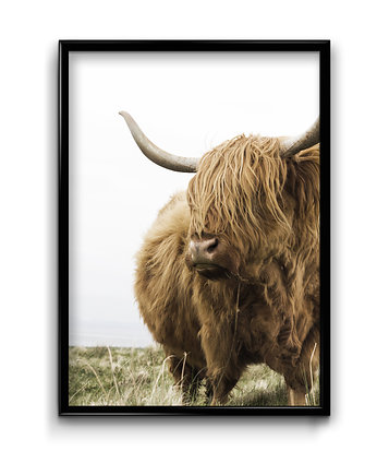 Bury Lis, Scottish Cow - plakat