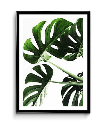 Bury Lis, Monstera - plakat