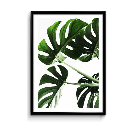 plakaty-Monstera - plakat