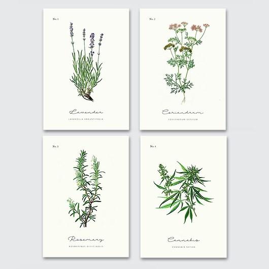 4 plakaty z ziołami do kuchni - 1986277